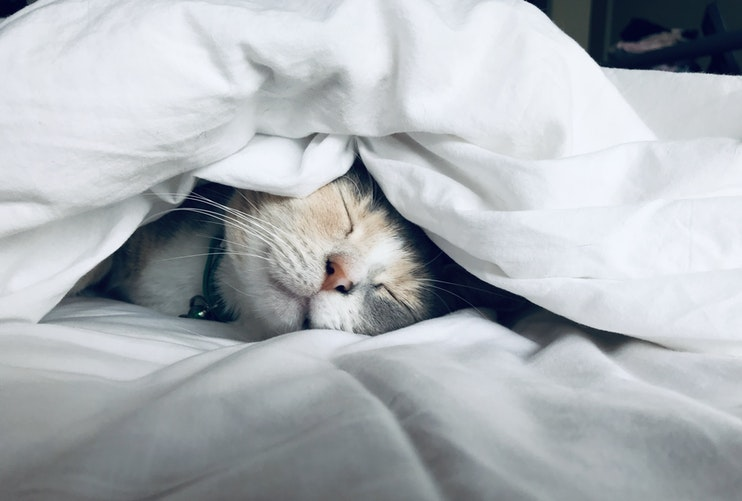 Cat under covers